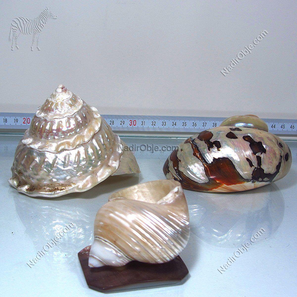3 Adet Sedef Deniz Kabuğu Cam-Taş Objeler Deniz