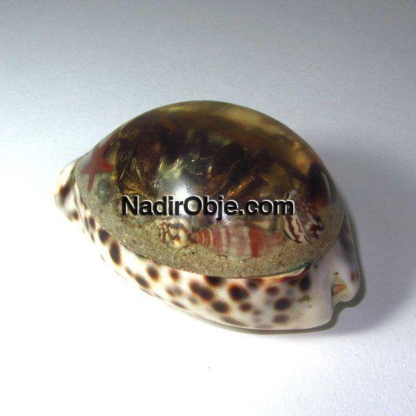 Deniz Kabuğu Kağıt Ağırlığı Cam-Taş Objeler Deniz